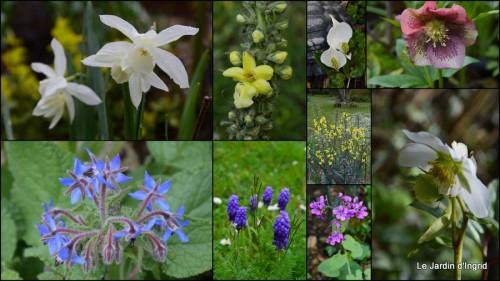 2014-03-28 jardin ,cane sauvage,paquerettes,tulipes3.jpg