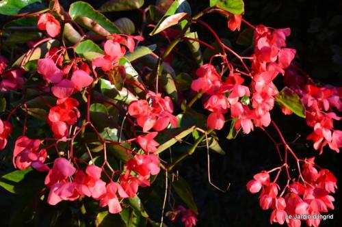 jardin début d'automne ,Sophie,rouge 101.JPG