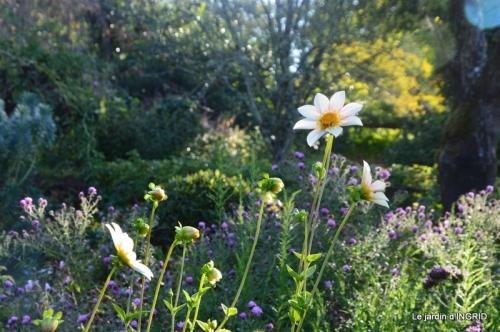 fleurs petit jardin,bouquets,grand jardin 036.JPG