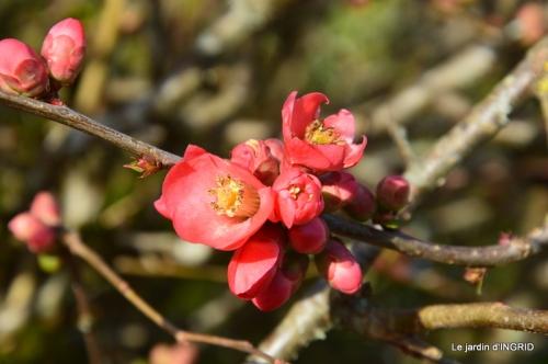 chez Fabien,hélébores,fleurettes 011.JPG