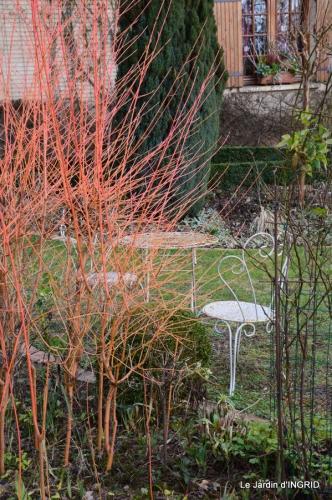 hélébores,bruyères,arbustes fleuries,mésanges 047.JPG