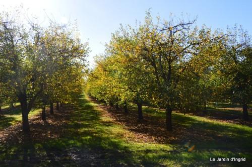 ménage automne,plectanthrus,feuillages 033.JPG