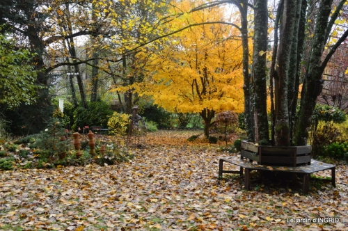 troc,automne,serre 071.JPG