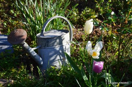 Bergerac, jardin ,arbres fruitiers,printemps 065.JPG