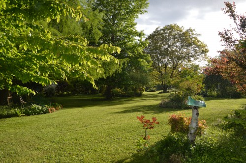 jardin,premières roses,colline,avant l'orage 116.JPG