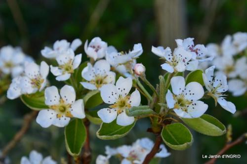 jardin printemps 113.JPG