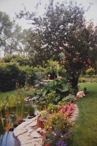 jacinthe,oiseaux,gouttelettes,vieilles photos,dégats 058.JPG