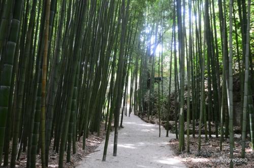 bambous Roque Gageac,jardin,bouquet 172.jpg