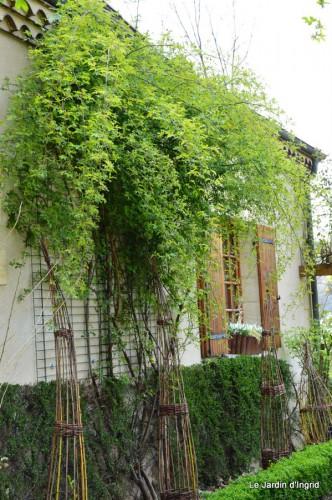 jardin ,cane sauvage,paquerettes,tulipes 027.JPG