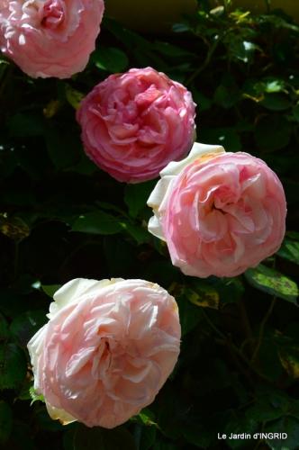 fête de la fraise Vergt,roses jardin 121.JPG