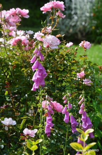 les roses,les 4 filles,jardin,Julie,coquelicots,cygnes 156.JPG