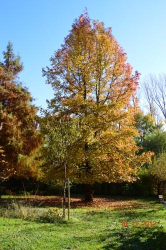 petit érable,le canal et lejardin àl'automne 035.JPG