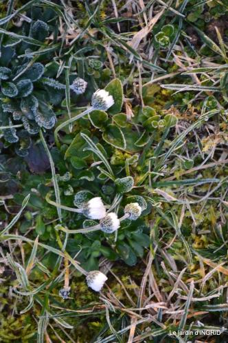 première gelée,compositions florales à garder,jardin 038.JPG