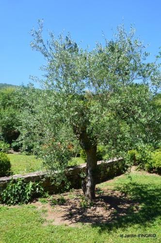 le jardin de Frescati,roses 079.JPG