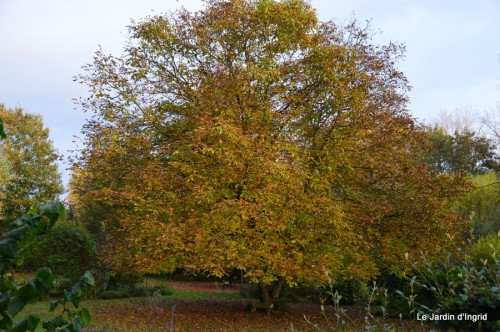 troncs,automne,vieilles photos 130.JPG
