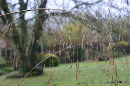 Brouillard,cypres chauve,jardinage 053.JPG