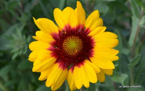 jardin Mme Perichou,grandes fleurs,bouquet,jardin 038.JPG
