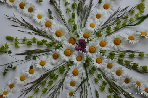 fleurs Beaumont,bouquet,tableau,serre,plants 046.JPG
