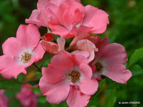 bouquet,fleurettes 004.jpg