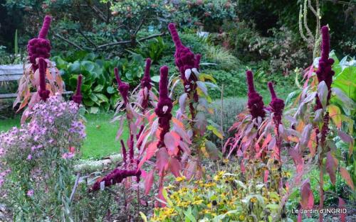 jardin ,chez Fabien,automne 101.JPG