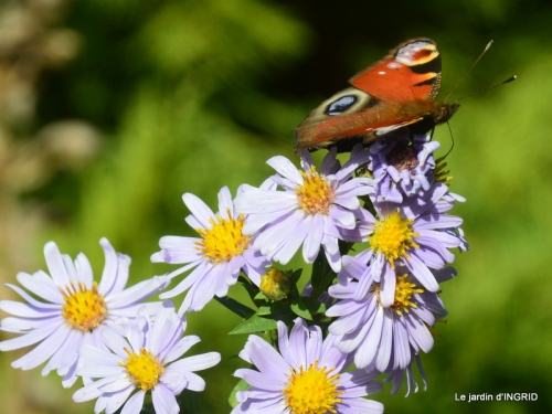 papillons,couleurs d'automne,Bernadette,pluie 033.JPG