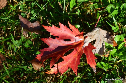 troncs,automne,vieilles photos 047.JPG