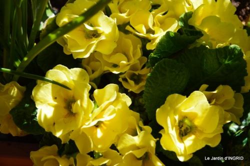 jardinière,insectes,achats 003.JPG