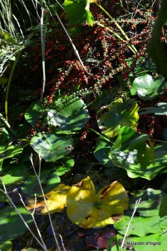 jardin octobre,chez Marylaur,Arnaud ,Ariane,la mer,sauges 193.JPG