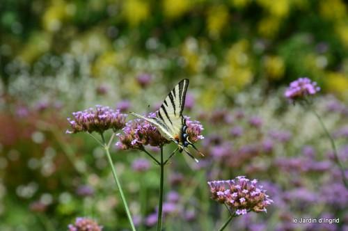 datura,papillon,Meyrals,déco Bergerac,bignonia 036.JPG