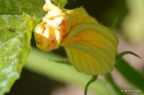 coeur des fleurs,papillons,libellules 085.JPG