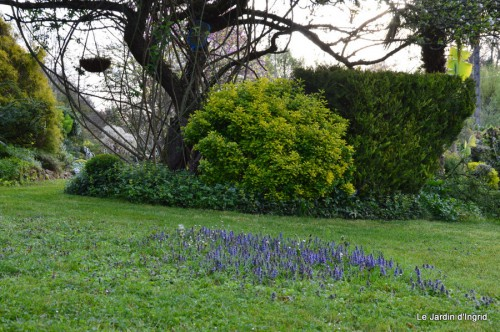 paquerettes,arums,laurier palme,jardin 065-001.JPG