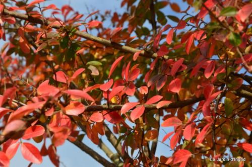 sauges,plectanthrus,Romane,canal,manthe r.,automne 063.JPG