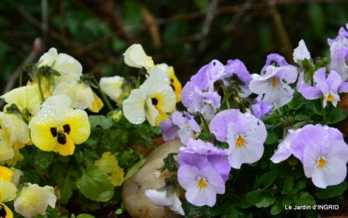 jardin (3 semaine de mars) 061.JPG
