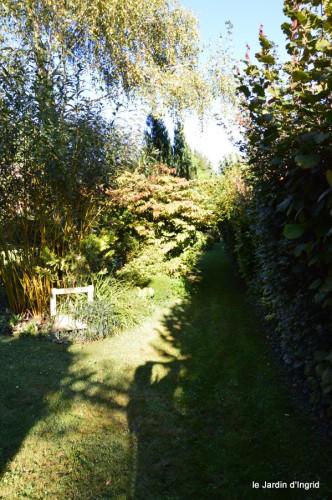 jardin,asters,fleurs blanches,chatte,rosiers roses 037.JPG