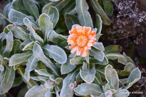 première gelée,compositions florales à garder,jardin 010-001.JPG