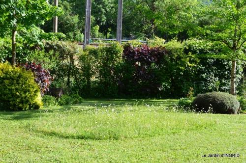 jardin soir et matin 059.JPG