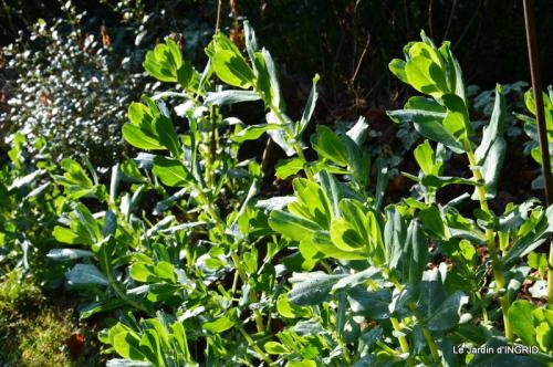 oiseaux,travaux,arbustes,les dernières fleurs 063.JPG