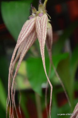 Orchidées,Noel jardiland,lever du soleil 017.JPG