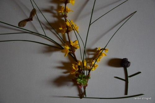 matin d'hiver,tableaux de fleurs janvier 046.JPG