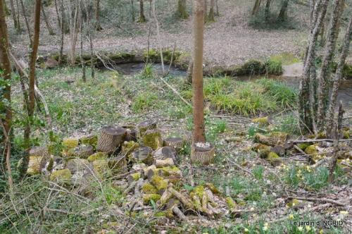 les jonquilles des bois 022.jpg