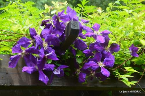 mon jardin,dégats buis, 070.JPG