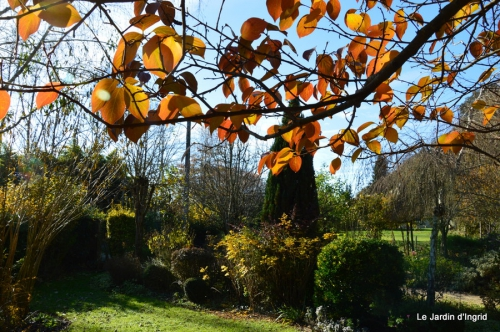 jardin automne ,petits roses 096.JPG