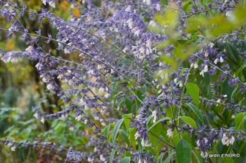 composition,kakis,jardin givré,asclépias,lalinde 052-001.JPG