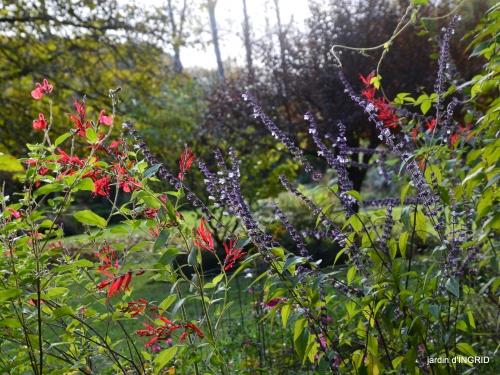 couleurs d'automne,bouquet,lune 143.JPG