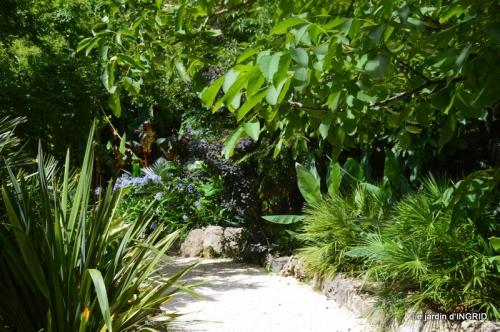 bambous Roque Gageac,jardin,bouquet 141.JPG