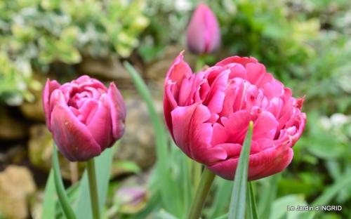 printemps,osier,tipi 051.JPG
