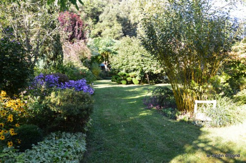 jardin,asters,fleurs blanches,chatte,rosiers roses 036.JPG
