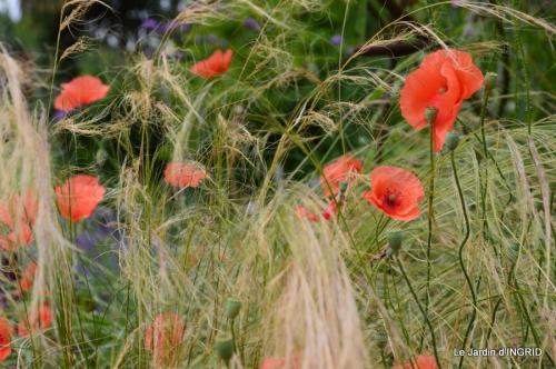 chez Fabien,le canal,jardin,hémérocalles,le souci,potager 055.JPG