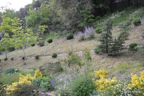 jardin,premières roses,colline,avant l'orage 012.JPG