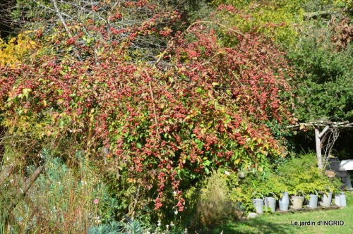 citrouille fleurie,décos jardin,automne 068.JPG